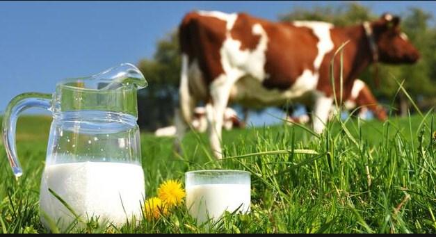 apa saja solusi untuk penderita alergi susu sapi anak bayi